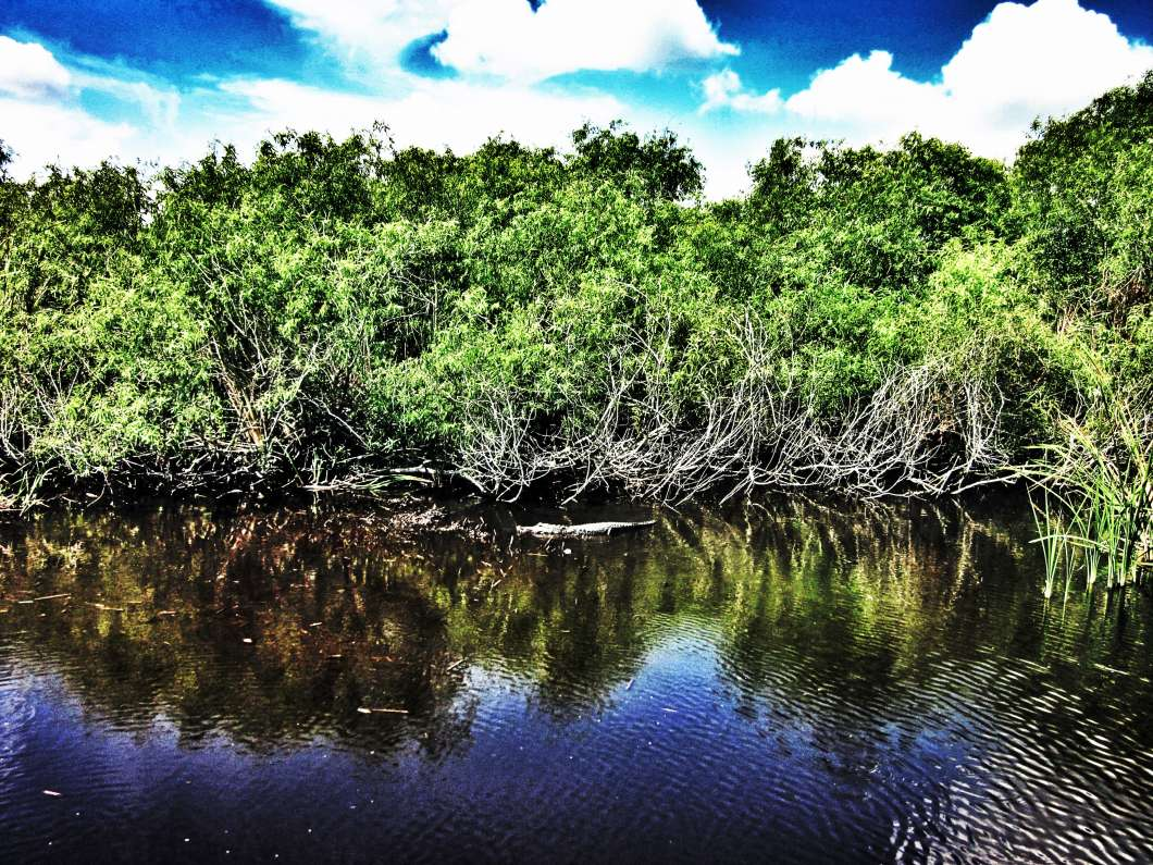 The Everglades. Photo: Roman Iakoubtchik, Flickr.
