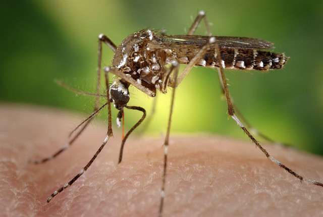 Mosquito-borne illnesses are on the rise along with tick and flea-borne illnesses. Photo: Flickr Creative Commons