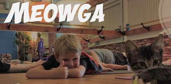 Meowga: Yin Yoga With Adoptable Cats (Credit: Inverted Elephant Yoga)