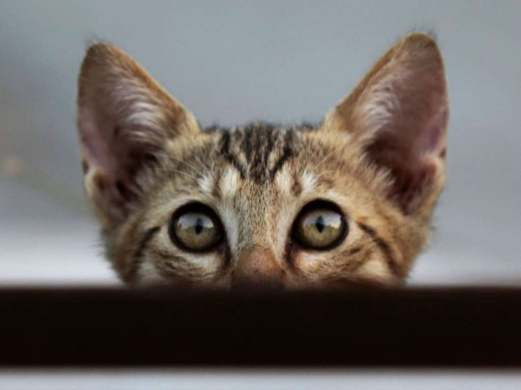 A street kitten looks out from behind a panel of lights in Cyprus in 2018.