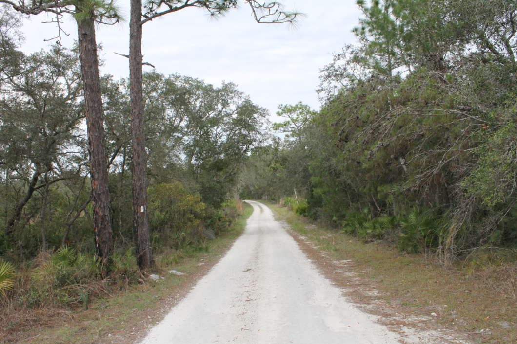Seminole State Forest is part of a wildlife corridor extending from the Wekiva Basin to Ocala National Forest. Photo by Amy Green