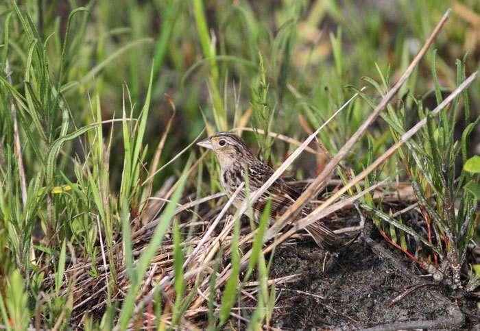 Photo courtesy Florida Fish and Wildlife Conservation Commission