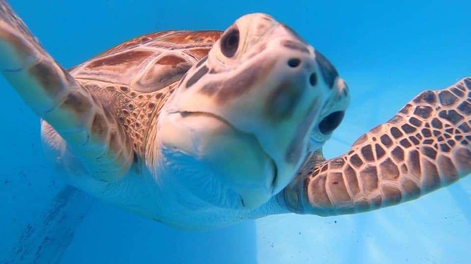 Photo: Florida Turtle Hospital